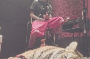 Tyga Could Face Criminal Charges For Pet Tiger