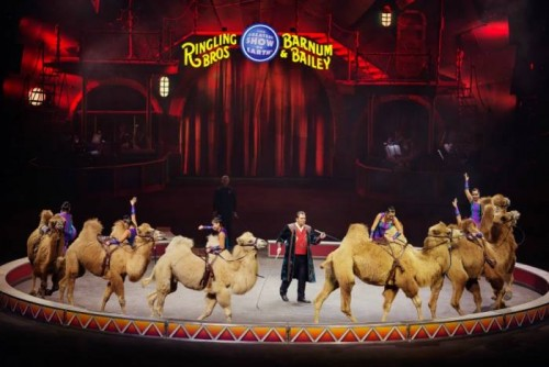 ringling-1-500x334 Curtain Call: Ringling Bros. & Barnum & Bailey Circus Will Perform For The Final Time In May
