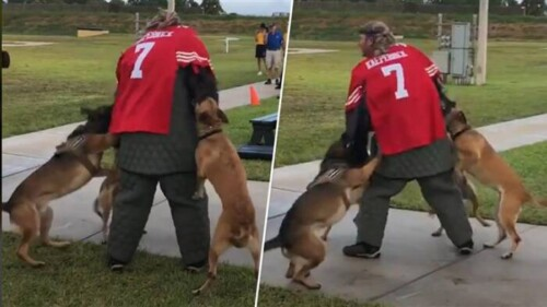 Navy-to-thoroughly-investigate-man-dressed-in-Colin-Kaepernick-jersey-for-K-9-demonstration-500x281 Navy to thoroughly investigate man dressed in Colin Kaepernick jersey for K-9 demonstration